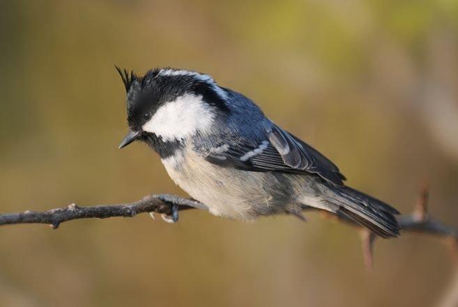 如何给宠物鸟选择饲料 给鸟选择饲料的方法